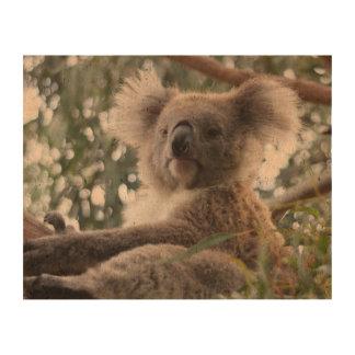 Oso de koala lindo papel de corcho para fotos