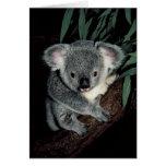 Oso de koala lindo tarjeta