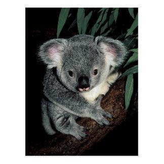 Oso de koala lindo tarjeta postal
