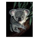 Oso de koala lindo tarjetas postales