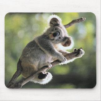 Oso de koala mouse pads