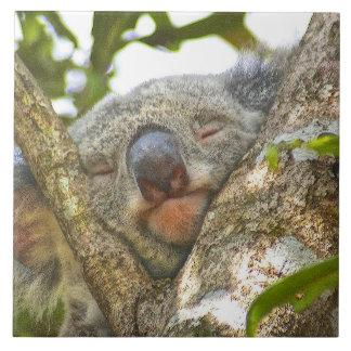 Oso de koala Napping Azulejos