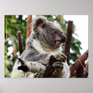 Oso de koala impresiones