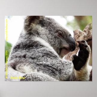 Oso de koala posters
