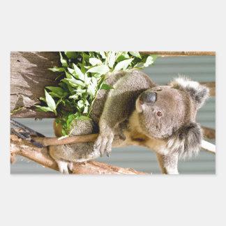 Oso de koala rectangular pegatinas