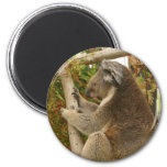 Oso de koala que duerme en un árbol imanes para frigoríficos