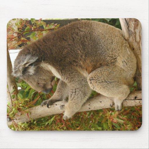 Oso de koala que duerme en un árbol alfombrilla de raton
