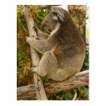 Oso de koala que duerme en un árbol tarjeta postal