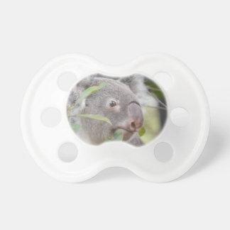 oso de koala que mira c derecha chupete de bebe