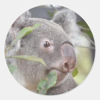 oso de koala que mira c derecha etiqueta redonda