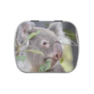 oso de koala que mira c derecha latas de dulces