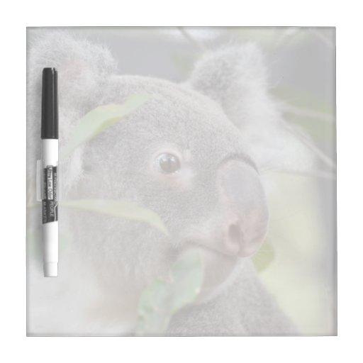 oso de koala que mira c derecha tableros blancos
