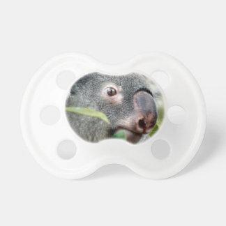 oso de koala que mira el ojo ascendente c.jpg del  chupetes de bebé