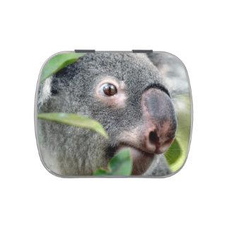oso de koala que mira el ojo ascendente c.jpg del  latas de dulces