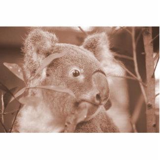 oso de koala que mira sepia.jpg derecho escultura fotográfica