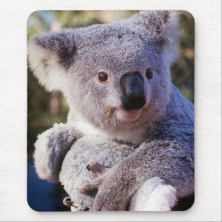 Oso de koala que sostiene un oso de koala alfombrillas de ratones