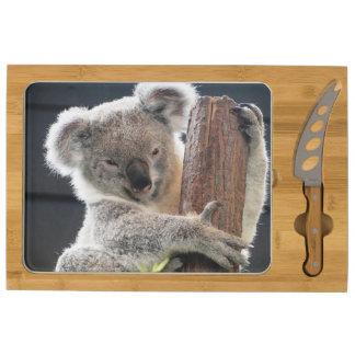 Oso de koala