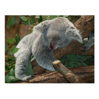 Oso de koala tan lindo postal