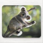 Oso de koala tapetes de ratones