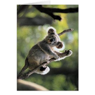 Oso de koala tarjeta de felicitación