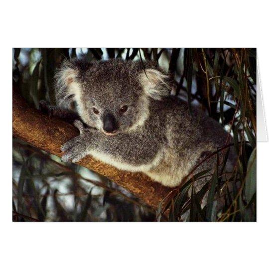 Oso de koala tarjeta pequeña