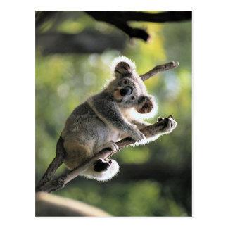 Oso de koala postales