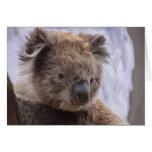 Oso de koala tarjetas