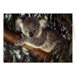 Oso de koala tarjetón