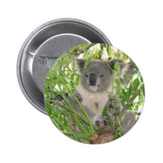 Oso de la koala de Helaine Pins