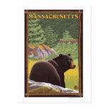 Oso de MassachusettsBlack en bosque Postales