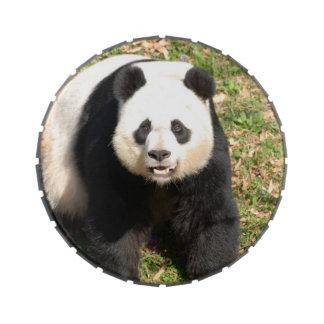 Oso de panda adorable latas de caramelos