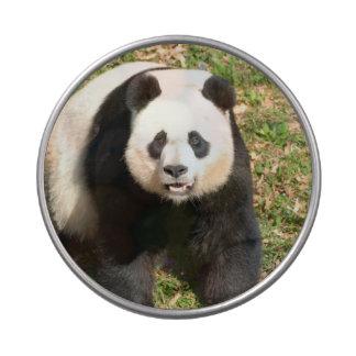Oso de panda adorable latas de dulces