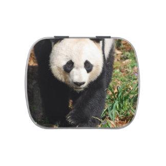 Oso de panda adorable frascos de dulces