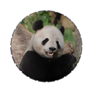 Oso de panda adorable jarrones de dulces