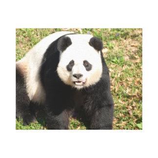 Oso de panda adorable impresión en lienzo estirada