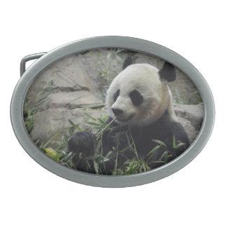 Oso de panda chino gigante hebilla cinturon oval
