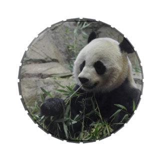 Oso de panda chino gigante latas de caramelos