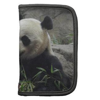 Oso de panda chino gigante organizadores