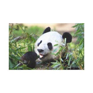 Oso de panda de alimentación lona envuelta para galerias
