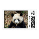 Oso de panda de China Sello Postal