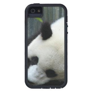 Oso de panda gigante iPhone 5 cárcasas
