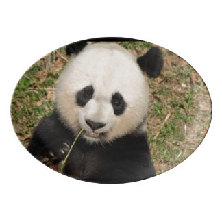 Oso de panda gigante lindo badeja de porcelana