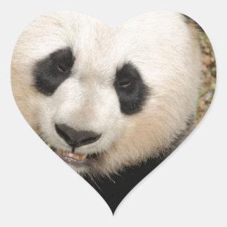 Oso de panda gigante lindo pegatina en forma de corazón