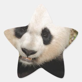 Oso de panda gigante lindo pegatina en forma de estrella