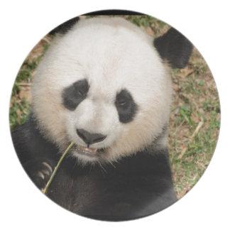 Oso de panda gigante lindo plato