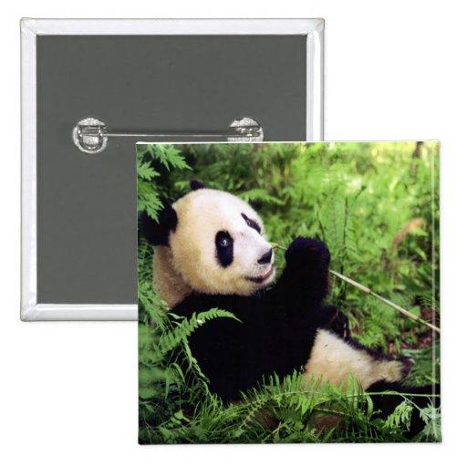 Oso de panda gigante pins
