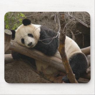 Oso de panda gigante y panda Mousepad del bebé