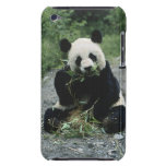 Oso de panda iPod Case-Mate cárcasas
