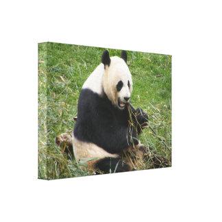 Oso de panda impresión de lienzo