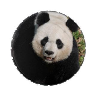 Oso de panda lindo latas de caramelos
